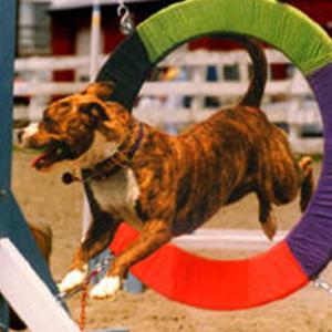 Alexis jumping through a hoop