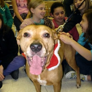 Lexi, Therapy dog smiling big while kids pet her