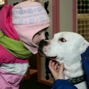 Myka, therapy dog being kissed by a little girl wearing a pink hat and pink jacket