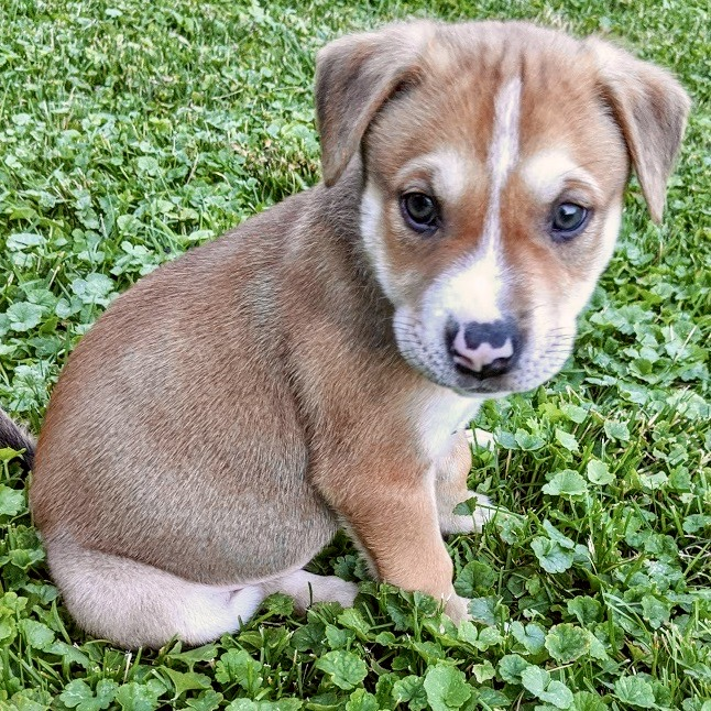 Cayden, Mixed Breed Puppy, Adoptable